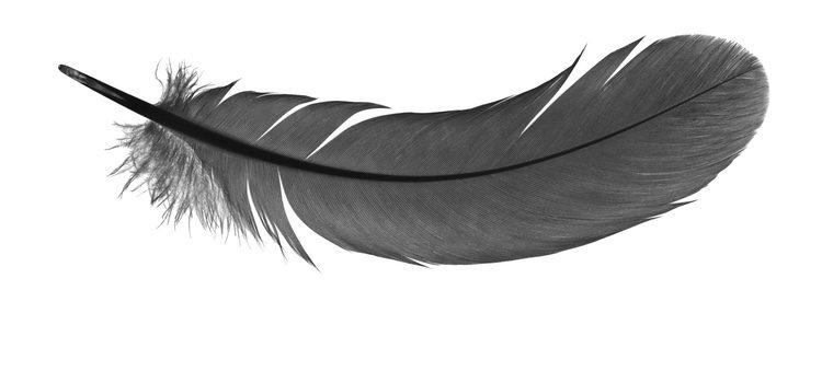 Las plumas decorarán muchas de tus prendas esta temporada
