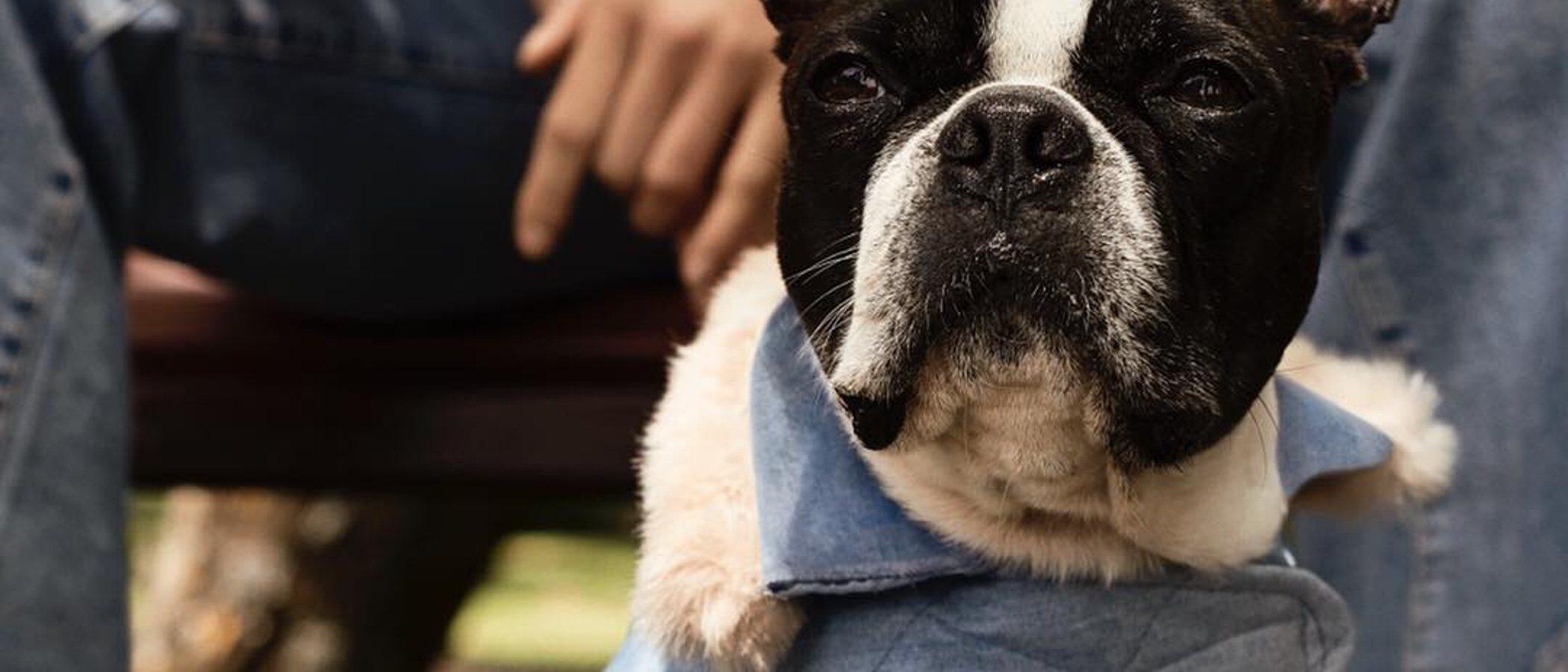 Moschino diseñará para H&M la primera colección de ropa canina
