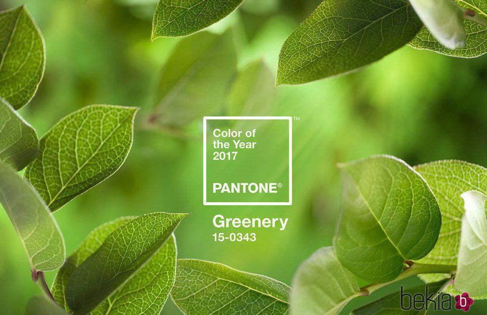 Color del año 2017 'Greenery' para Pantone
